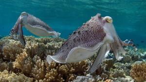 Seychellen-Top-Luxusreisen_10-300x169