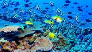 Seychellen-Top-Luxusreisen_11-300x169