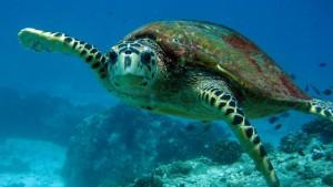 Seychellen-Top-Luxusreisen_13-300x169
