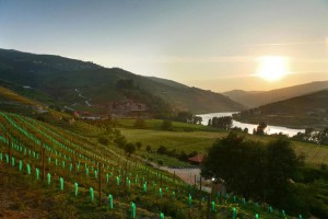 Six-Senses-Douro-Valley_Top-Luxusreisen_14-300x200